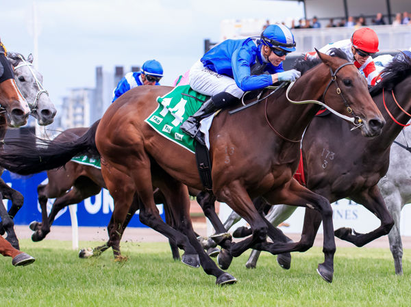 Oceanex claims the Matriarch Stakes for Ocean Park