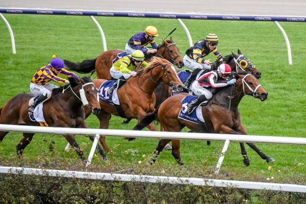 Octane winning down the straight at Flemington (Racing Photos)