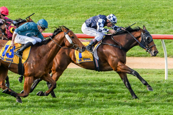 Order Of Command toughs it out in the Wangoom (Alice Laidlaw/Racing Photos)