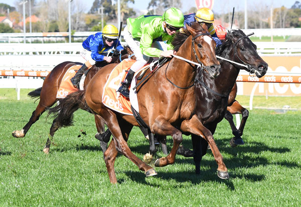 Our Playboy wins the G3 Vain Stakes - image Pat Scala / Racing Photos