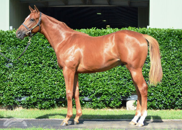 Over Exposure as a yearling
