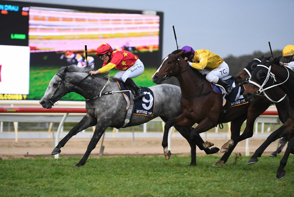 Paths of Glory wins the Wyong Cup - image Steve Hart