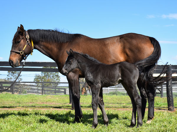 Peace Time and her More Than Ready filly.