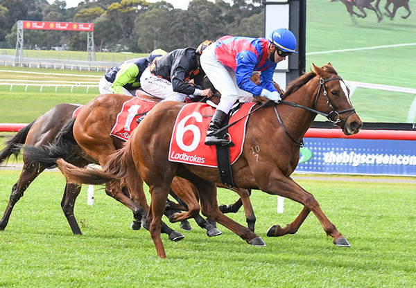 Peggy Selene scores a soft win at Sandown - image Pat Scala / Racing Photos