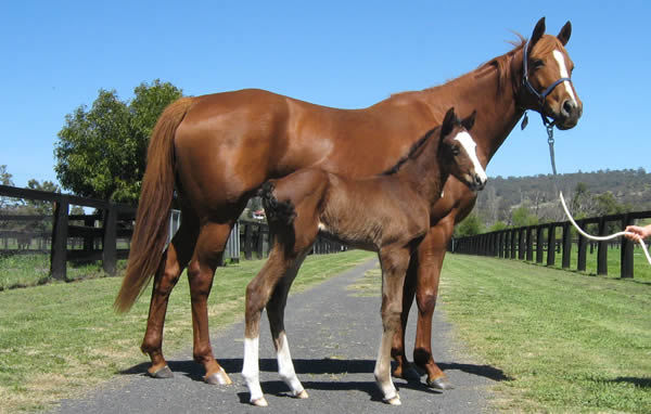 Personify has been a great producer for Cressfield - pictured in 2008 with her first foal a filly by Redoute's Choice.