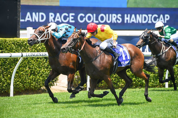 Snitzel filly Philizzy makes a winning debut at Randwick - image Steve Hart