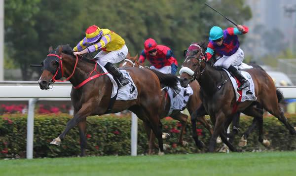 Hong Kong Derby winner Ping Hai Star