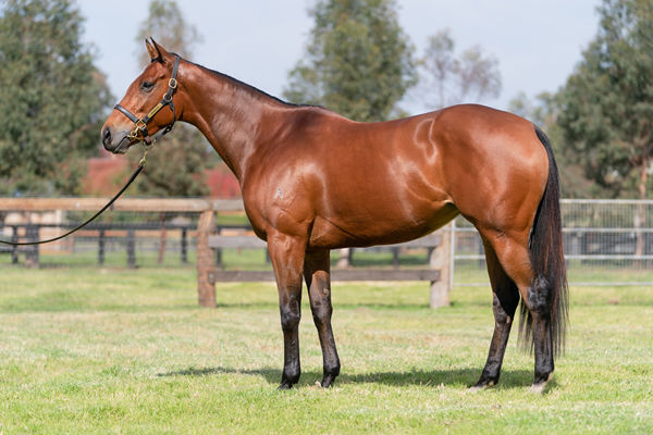 Lot 46, click to see her page.