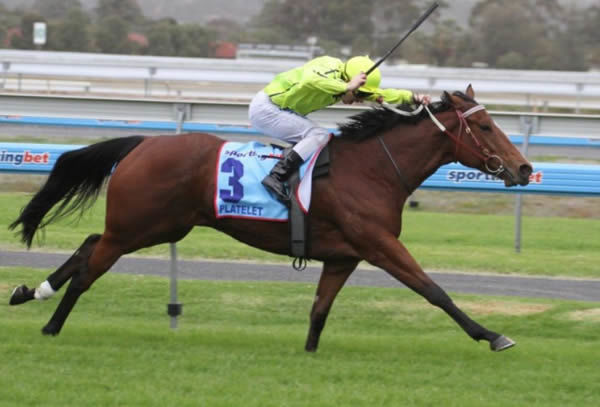 Platelet was a brilliant racemare that won 10 races highlighted by G1 Sangster Stakes and Goodwood Handicap