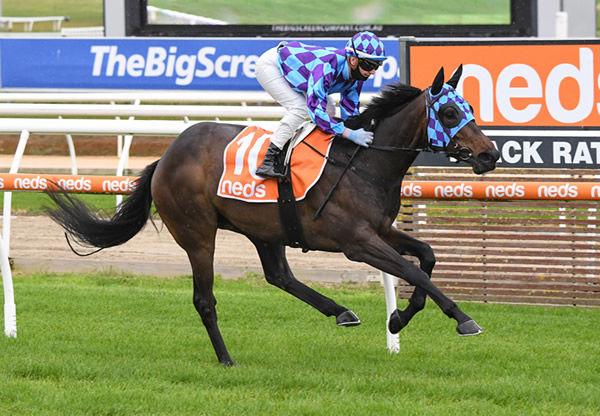 Pride of Jenni wins at Mornington - image Pat Scala / Racing Photos