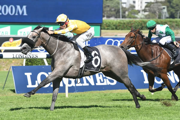 The dam of G2 winner Pure Elation is for sale.