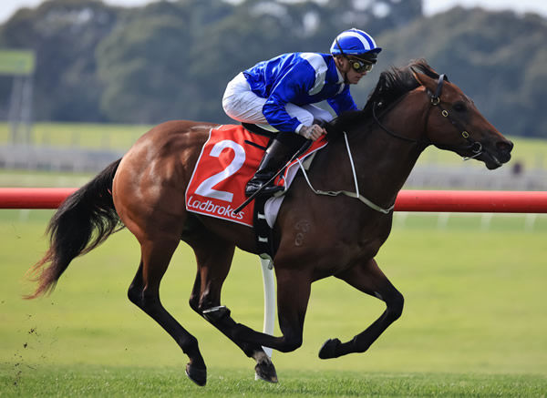 Qeyaady wins well at Sandown and his dam is for sale at MM National - image Grant Courtney.