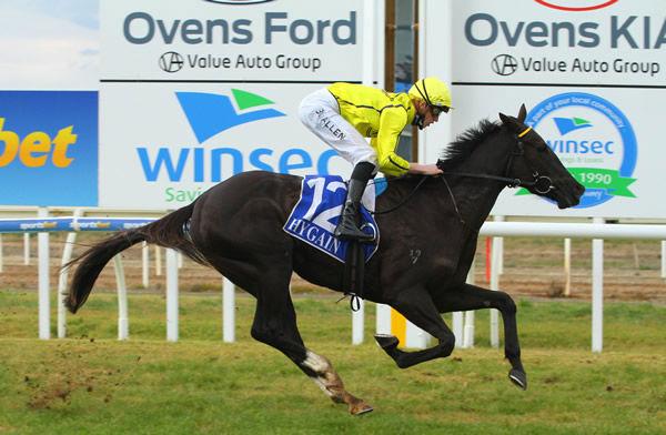 Quick 'n' Dandy wins at Wangaratta - image David Thorpe - Racing Photos.