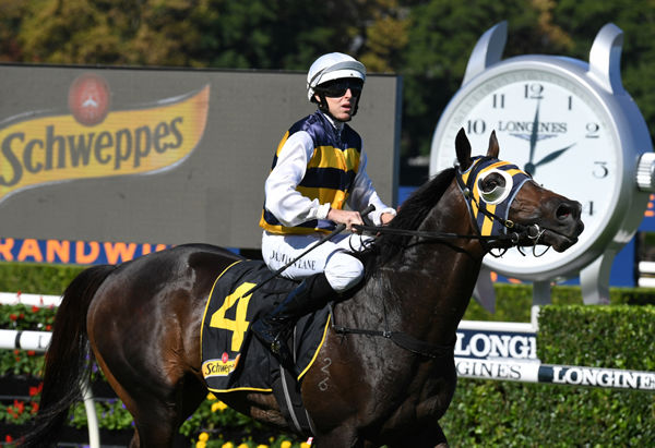 Quick Thinker is back in the winning groove!