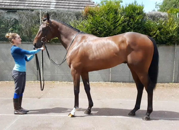 Real Appeal was bought as a tried horse from the Goffs London Sale.
