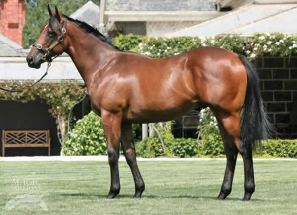 Return With Honour as a yearling
