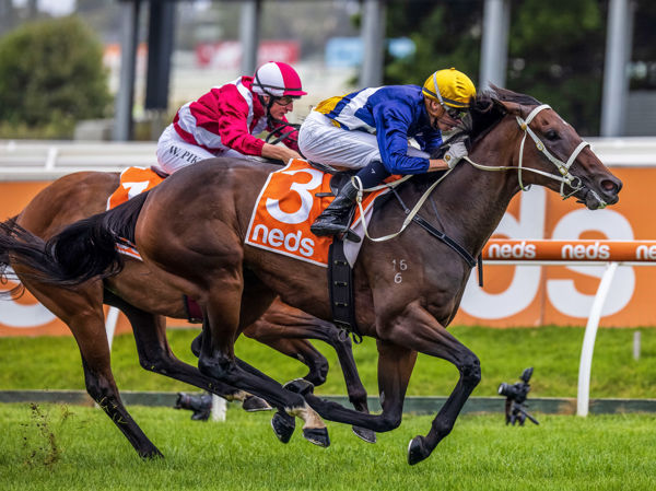 Rich Hips is one of several recent stakes-winners with siblings to be offered at Inglis Premier.