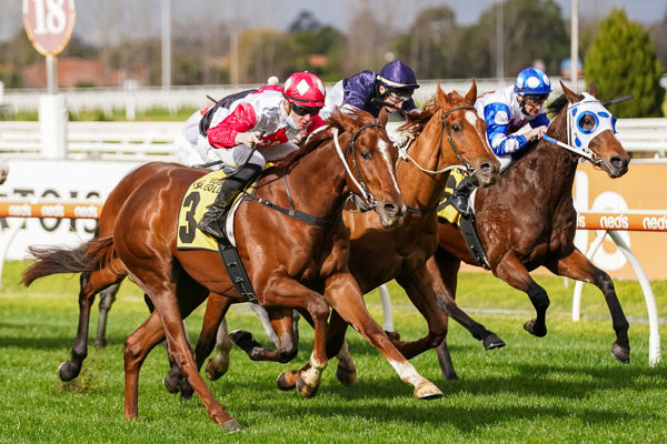 River Views blows the punters out of the water (image Scott Barbour/Racing Photos)
