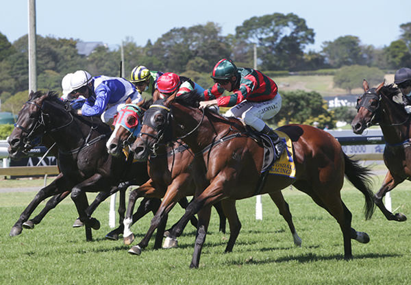 Rocket Spade is on tack for the G1 New Zealand Derby - Trish Dunell.