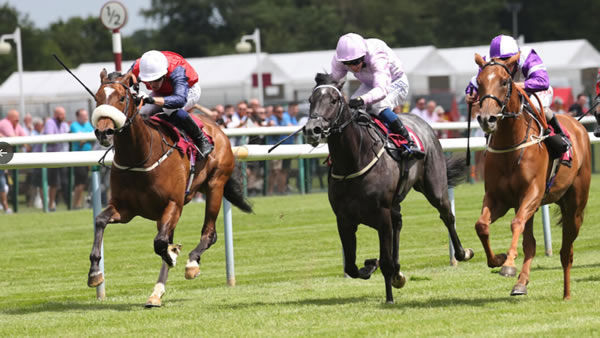Sadmah wins at Haydock on debut - image Haydock Races Twitter