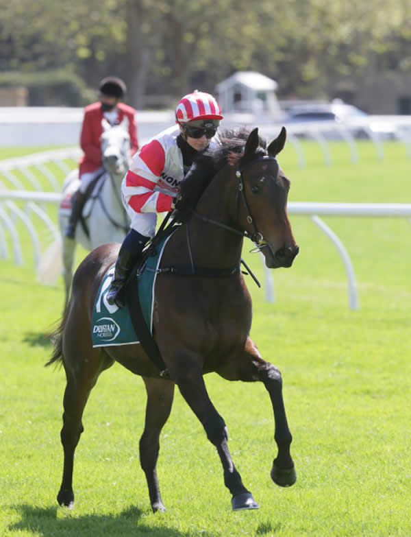 Seven Twenty will contest the DoubleTree by Hilton Karaka Million 2YO (1200m) at Ellerslie on Saturday. Photo: Trish Dunell