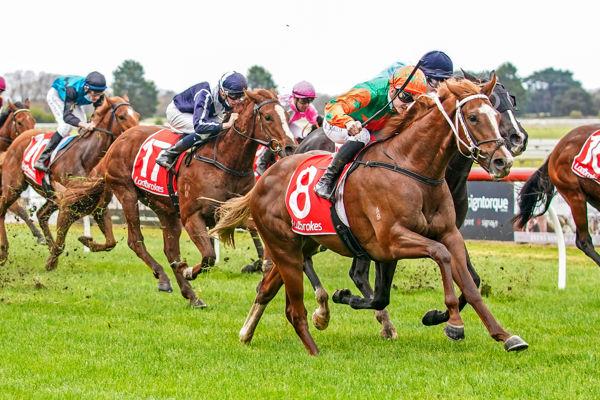 Sharp Response makes winning debut (image Scott Barbour/Racing Photos))