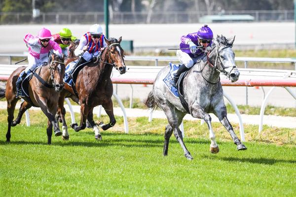Sharwin makes a winning debut (image Pat Scala/Racing Photos)