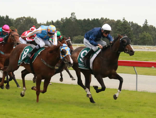 Showemhowitsdone (inner) holds out The Gift to win the Listed Liquorland Gore Guineas (1335m) Photo Credit: Monica Toretto