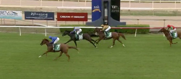 Siege makes an exciting debut (image Wyong Race Club)
