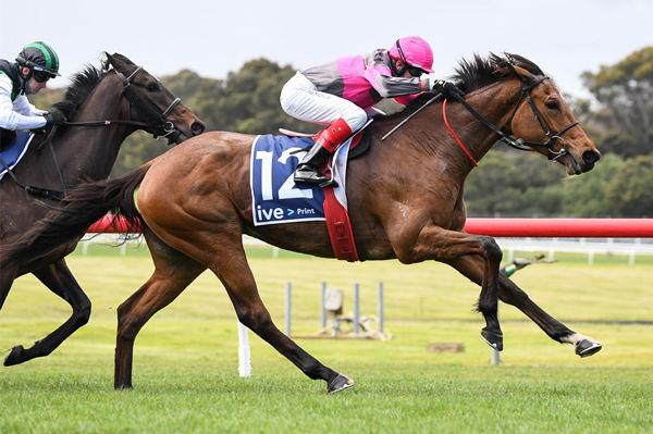 Sirileo Miss won stylishly at Sandown - image Scott Barbour / Racing Photos