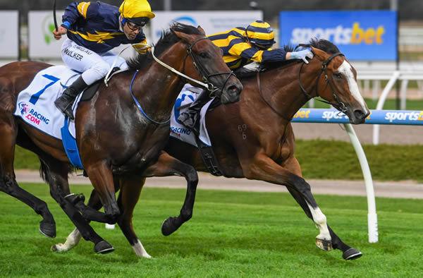 Skyhorse wins at Sandown - image Racing Photos