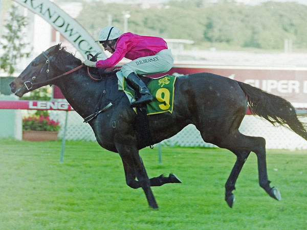 Spinning Hill was a superstar sprinter for Tait family in the early 1990's - image Steve Hart.