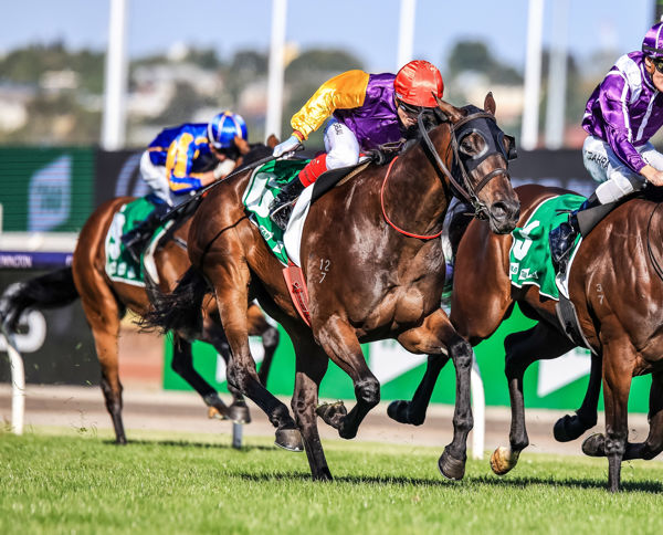 Starelle finishes best in a thriller (image Grant Courtney)