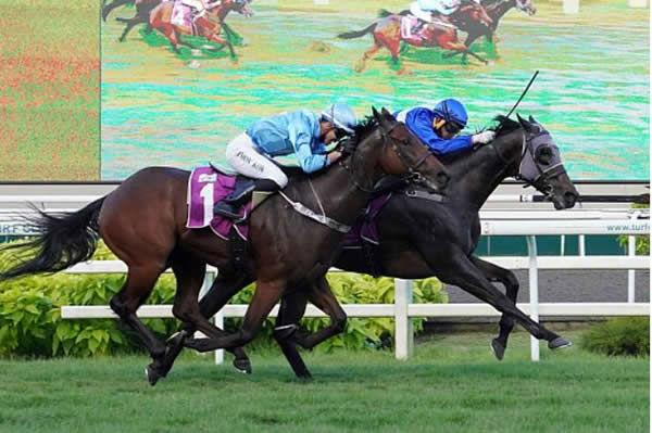 Headwater gelding Starlight defeats Wandjina gelding Tiger Roar - Singapore Turf Club.