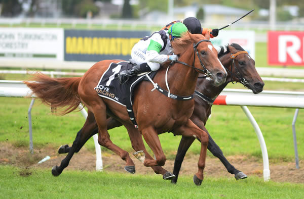 Lisa Allpress drives debutant Stormy to a hard fought victory at Awapuni Photo Credit: Race Images – Peter Rubery