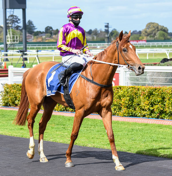 looking mighty proud of herself Succeed Indeed with Lachie King (Pat Scala/Racing Photos)