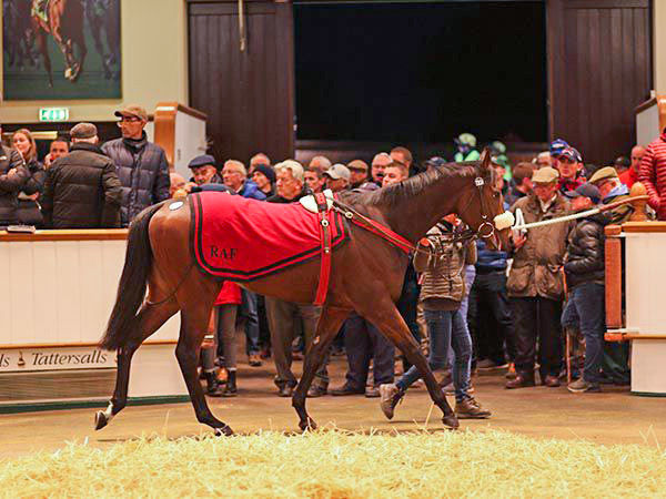 Record Priced Colt Summer Sands - image Tattersalls