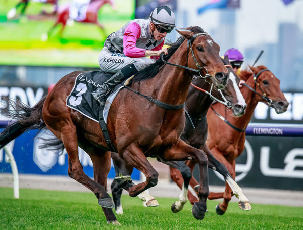 Surprise Baby is by Melbourne Cup winner Shocking - image Grant Courtney