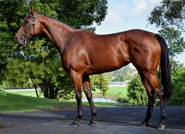 Lot 58, click to see her page.