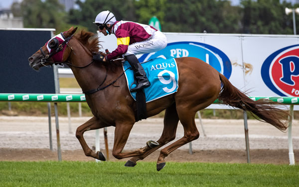 SWift Witness books her spot in the Magic Millions 2YO Classic - image Grant Courtney.