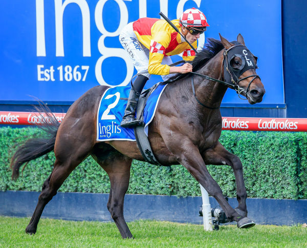 Tanker wins on debut - image Grant Courtney