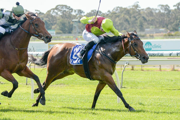 The Last Charge Makes a wiining debut - image Racing Photos