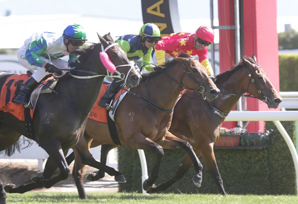 The Real Beel arrives on the outside in the Waikato Stud colours - image Trish Dunnell
