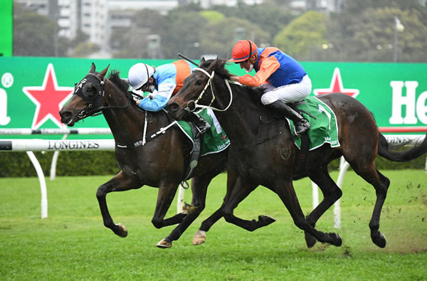 Think it Over Wins G2 Chelmsford Stakes | Breednet