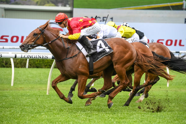 His father's son Tiger Of Malay makes a winning debut (Steve Hart)