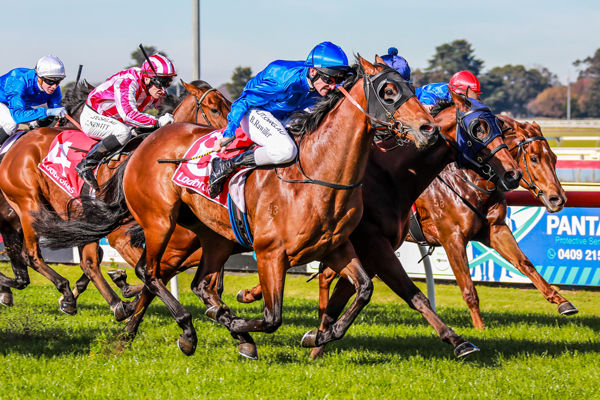Tolkowsky makes a winning debut at Sale (Leonie Grbic/Racing Photos)