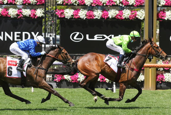 Tralee Rose winning at Flemington on Thursday. Photo: Bruno Cannatelli