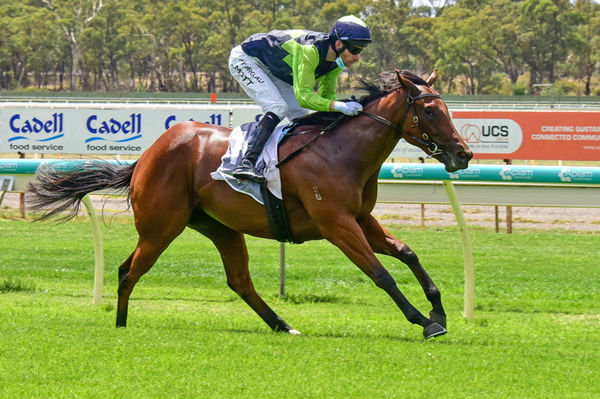 Tycoon Humma makes a winning debut at Bendigo (image Racing Photos)