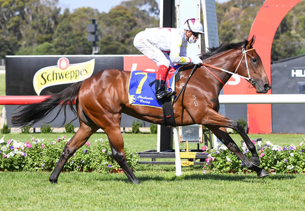Vandoula Lass bolts in at Sandown - image Pat Scala - Racing Photos.