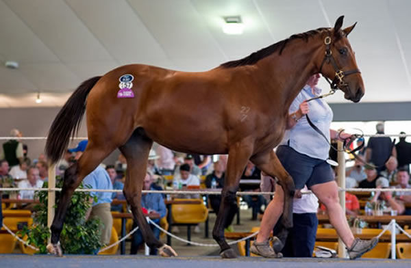 Victoria Quay topped the 2019 Magic Millions Adelaide Sale when fetching $250,000.